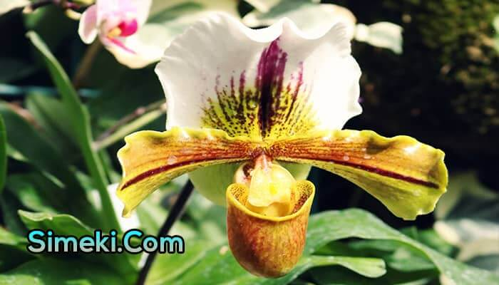 how long do orchids bloom indoors
