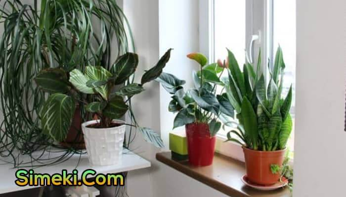 how to keep plants alive when on vacation for a month