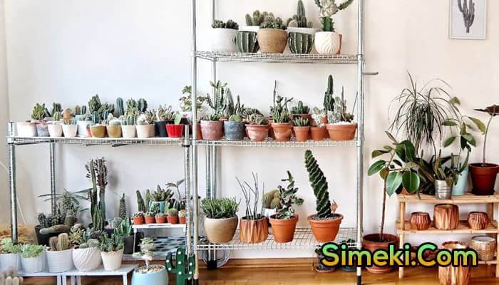 how to take care of cactus in winter
