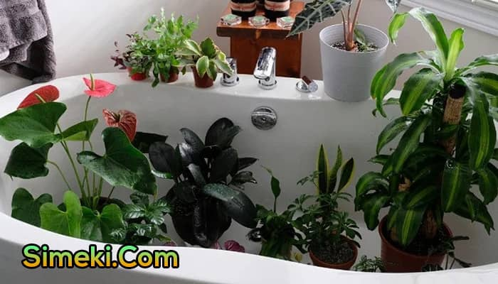 how to water plants while on vacation for a month